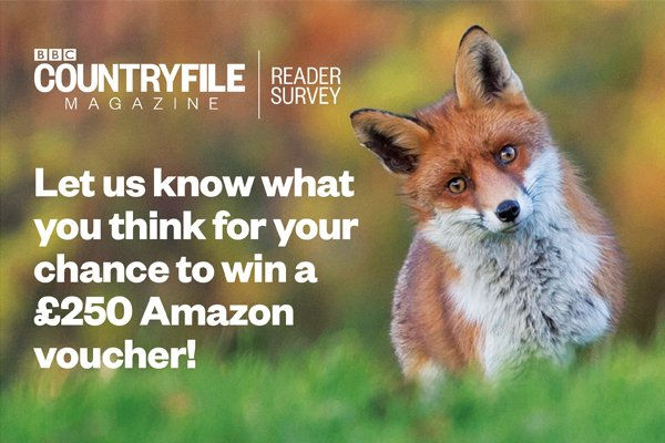We want to hear from you! Would you like to have your say in the development of BBC Countryfile Magazine? Let us know what you think for a chance to win a £250 Amazon voucher: bbcstudios.com/survey-web