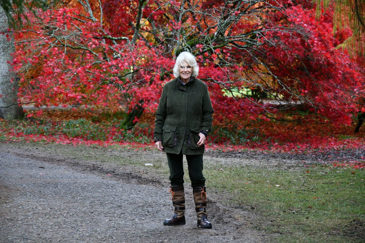In 2006, The Prince and The Duchess planted a tree in the newly established Maple Loop. 🍁 @WestonbirtArb is home to the national collection of Maples and Japanese Maple Cultivars. Started in the 1980s, today the collection contains around 297 different types of cultivar.