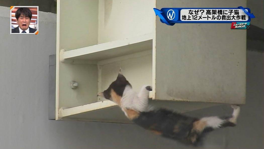 高架橋に置き去りにされた子猫が落ちそうになる映像の安住アナ(猫好き)の表情