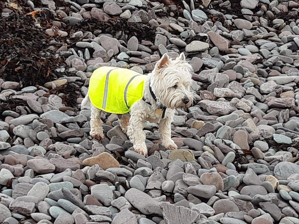 Max on the beach at Porlock Weir. https://t.co/DJ4AWI11Ek