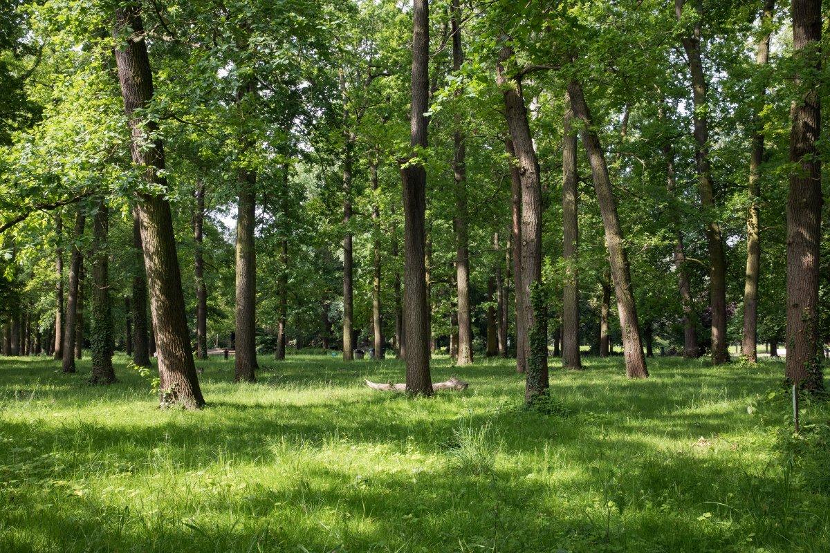 [#Information] Pour offrir plus de temps dans les espaces verts aux promeneurs et sportifs, @Paris a décidé d'étendre les horaires d'ouverture de 3 parcs jusqu'à 19h30 : le parc Martin-Luther-King (17e), le parc de Belleville (20e) et le parc René Le Gall (13e). https://t.co/oOg3Edq7wM