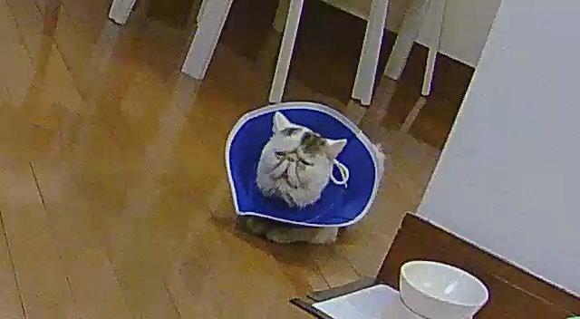 防犯カメラで実家の(猫たちの)様子を見てますがたまに面白い顔が見れる