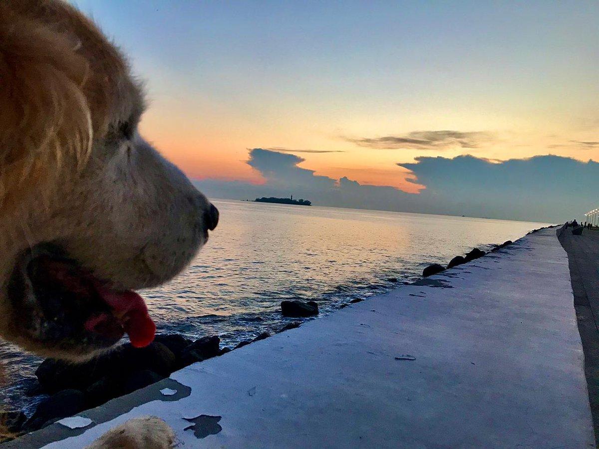 ¡Feliz lunes! Nuestro amigo Gio, frente al precioso amanecer de nuestro puerto, te desea la mejor de las semanas.  📸 : Jorge Lara  #Amanecer #AmanecerJarocho #Sunset #Sunrise #Fotografía #ElDictamen https://t.co/pMmim6ECpI