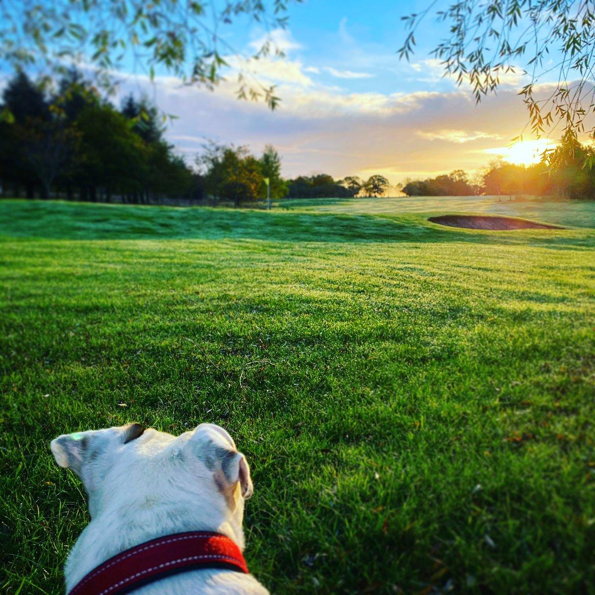 It's a dogs life #doggo #dogslife #sunrise #walkies #walks #morning @KatyRickittITV @LewisHamilton https://t.co/pbfxyC3JDj