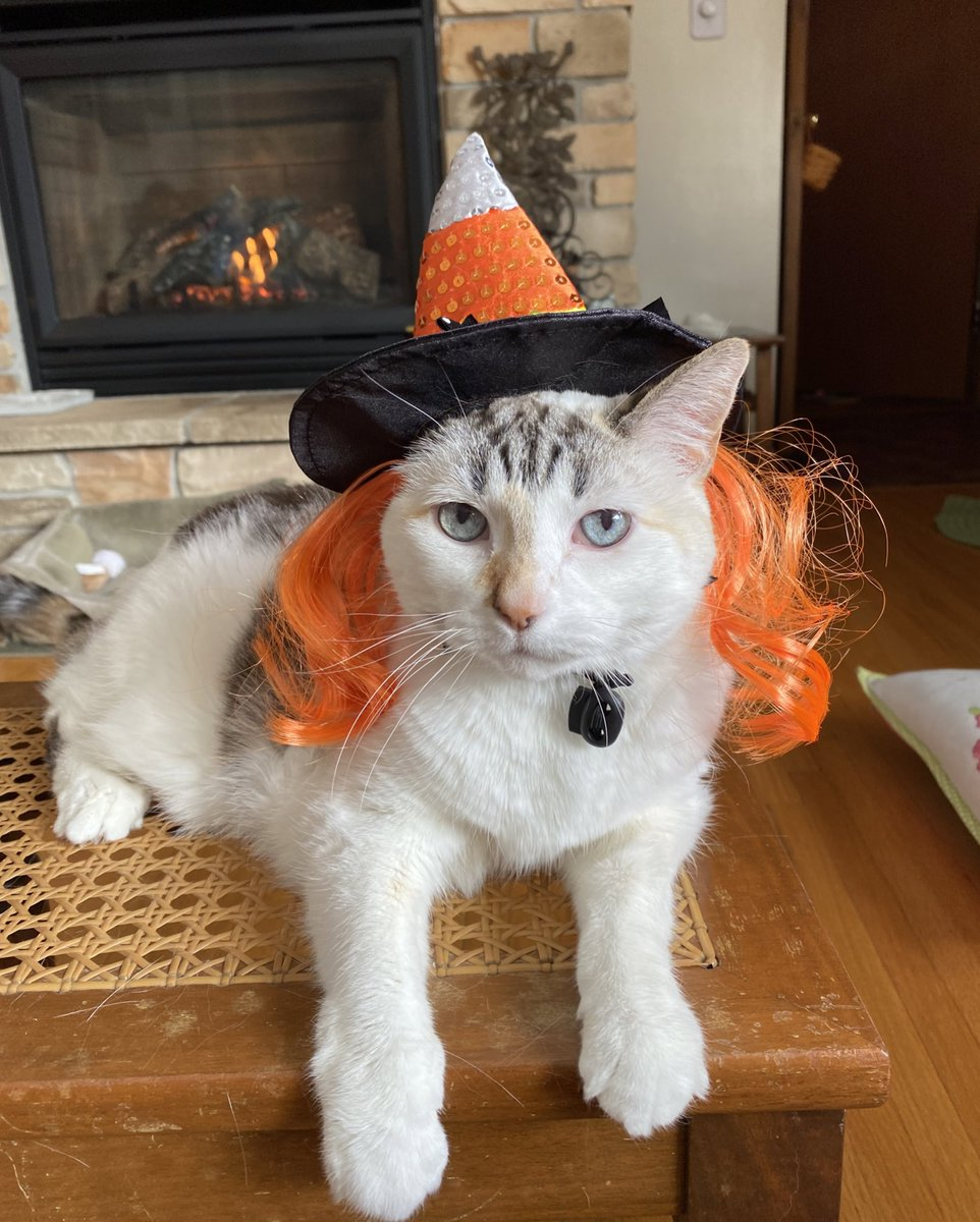 Pincy's #Halloween joke of the day:  What treat do eye doctors give out on Halloween? Candy corneas. https://t.co/mgdiz8a8TT