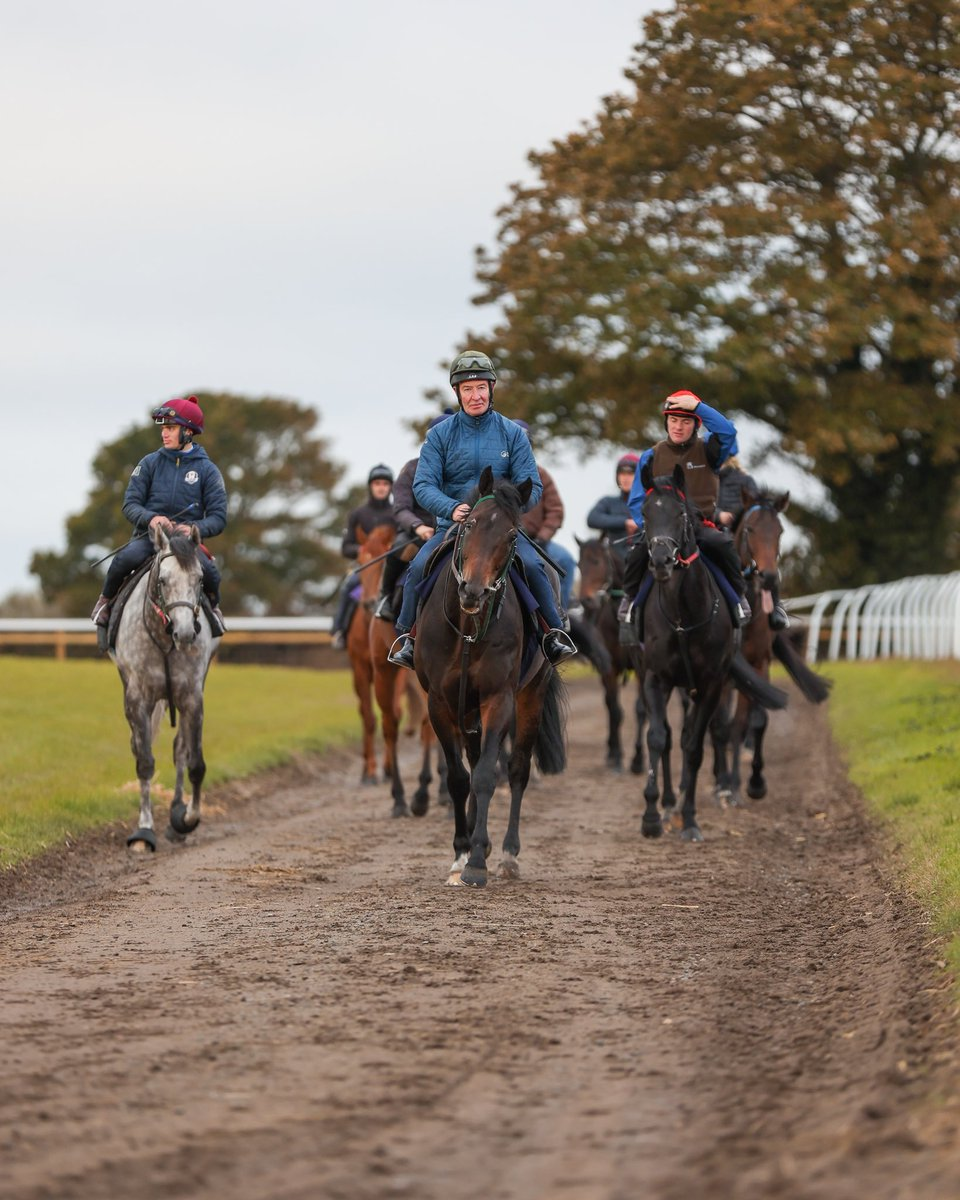 Some of our @RichardFahey string on the gallops. 🍁  #TeamMPR