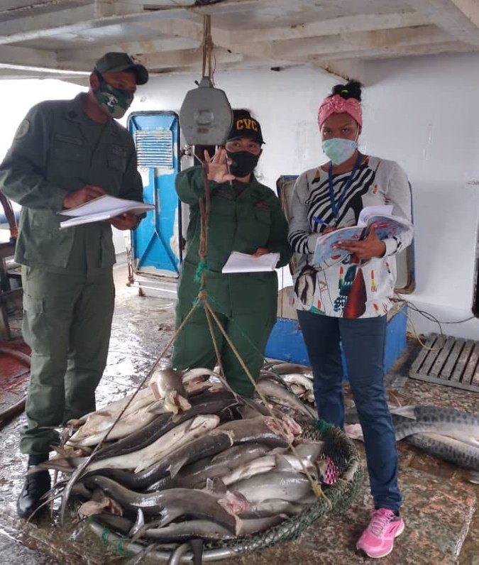 #GMAS #26Oct En resguardo de la soberanía alimentaria, la @zodimainat a través del @dvcza55 y la @EpgZona, supervisó en los muelles 1 y 8 del Puerto Pesquero Internacional de #Güiria, el arrime de 9.193 kg de especies hidrobiológicas.#VenezuelaAzul #CuarentenaRadicalEficaz https://t.co/kszIkpdozp