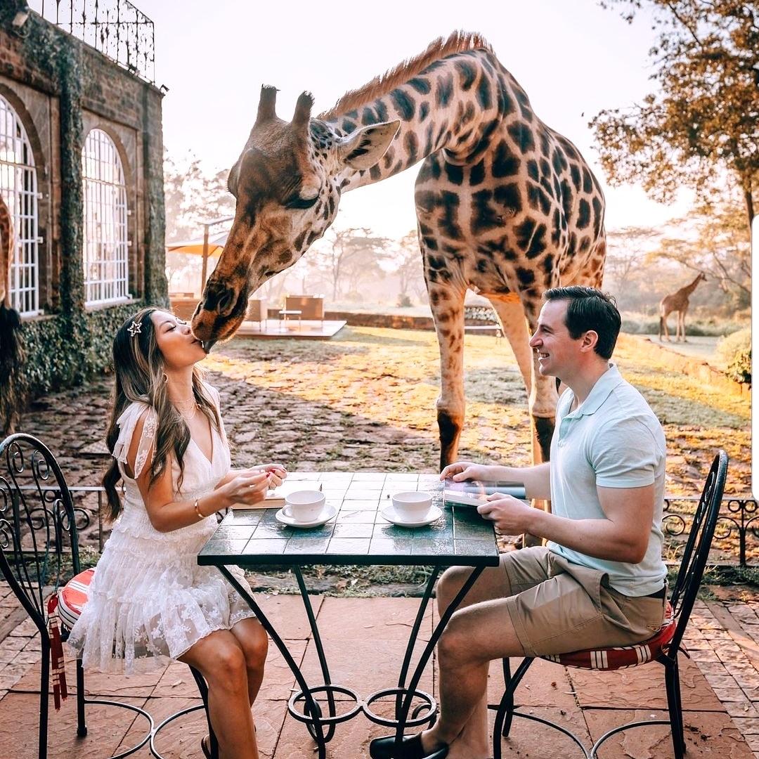 Do you like Giraffes?  Follow @roadtrippers_t 📷 tourdelust - IG  #travel #nature #photography #travelphotography #love #photooftheday #instagood #travelgram #picoftheday #instagram #photo #beautiful #art #wanderlust #like #instatravel #naturephotography #adventure https://t.co/5Z2brTg1mu