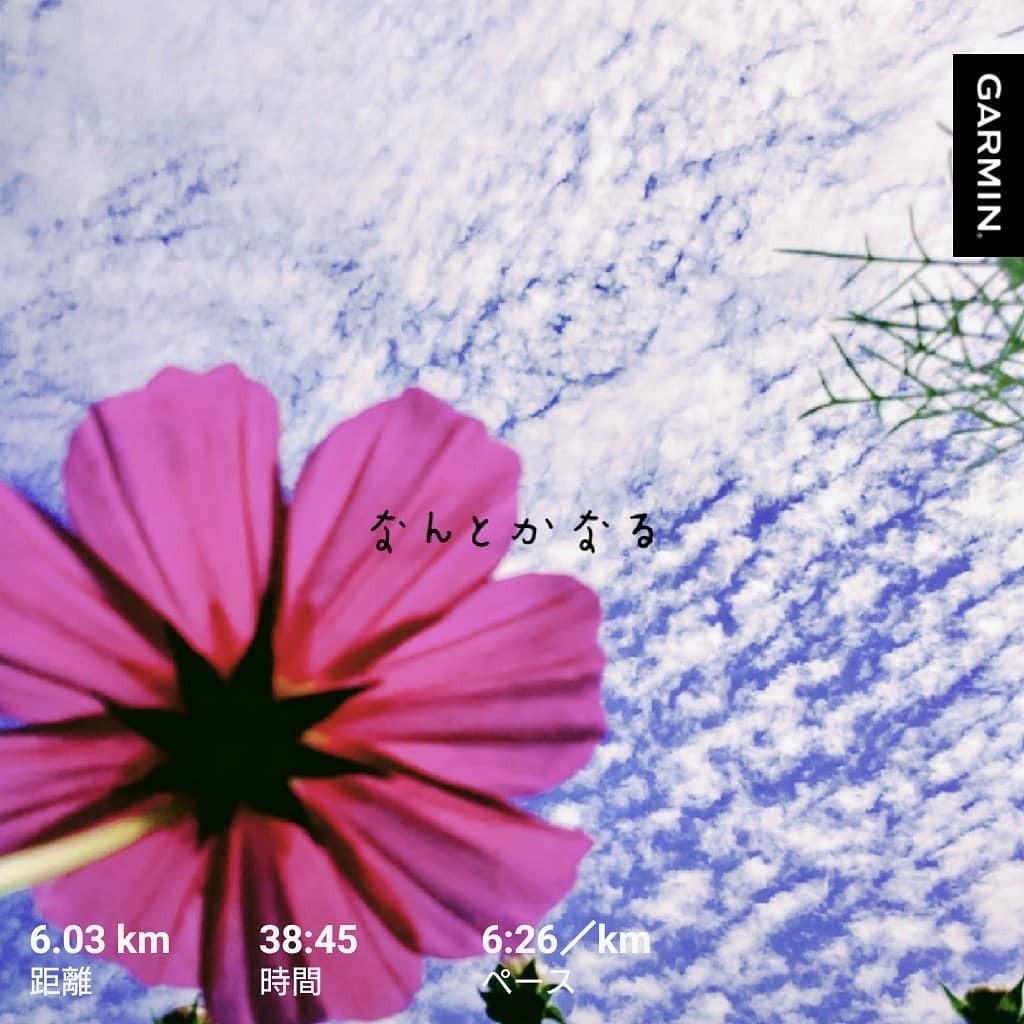 #火曜日 の #朝ラン 終了。  気温12.8℃ 湿度87%  ウィンドブレーカー着てみた。 ちょうどよかった。  #おはよう #朝 #ジョギング #jogging #ランニング #running #run  #福岡 #走れることに感謝 走ったのは #大濠公園  写真は先日の #能古島 https://t.co/WK5m4sI9pS https://t.co/lR0QFlA4Sk