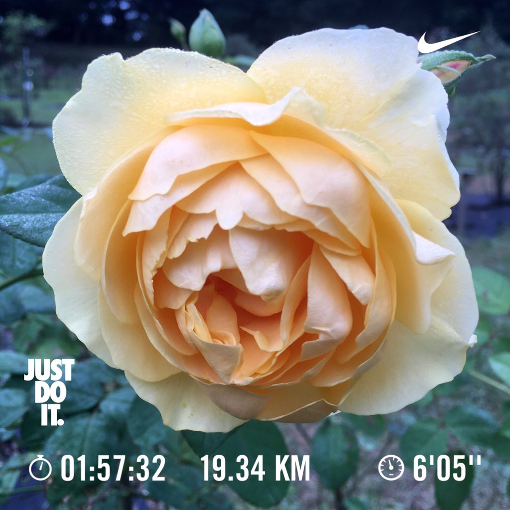 Have a nice day☀️ & nice running! 👟 Today's 🏃♂️:19.3km /Oct.Σ:401.4km🎊👍 Today's 🌸📷:Machida Tokyo🇯🇵 🏃♂️➡️ #NRC #JustDoIt #nikeplus #run #朝ラン #ランニング #runner #日の出 #御殿山無線塔 #道了堂跡 #絹の道 #都心遠望  🌼➡️ #花写真 #花写っと #flower #nature #バラ #Rosa #モリニュー https://t.co/pIghbyGfac