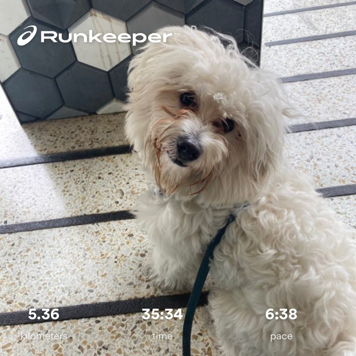 #run with Pebbles. It was nice to get out after the rain https://t.co/oW5vJGu2Ku