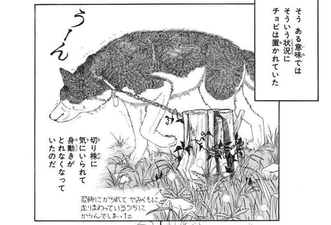山中で逃走の警察犬みつかる リードが木に絡まり動けず…けがなし無事保護 兵庫・福崎(神戸新聞NEXT)#Yahooニュースチョビ…チョビじゃないか……