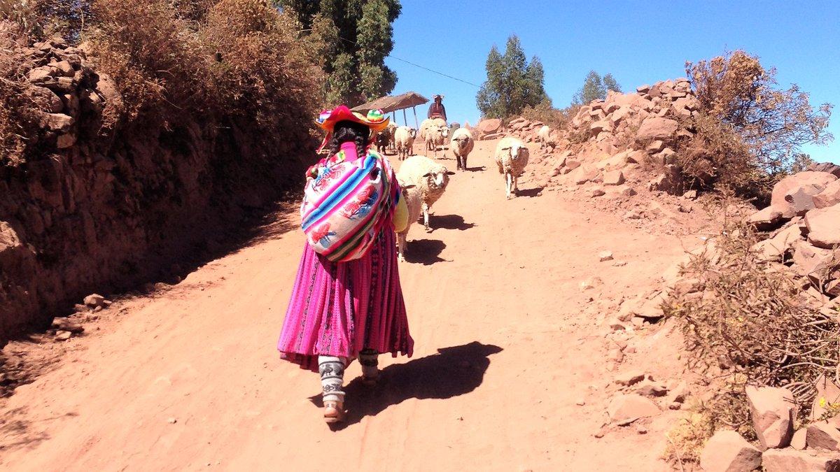 Sonne und Farben gegen das Corona-Herbstgrau Berlins: #Titicaca #Capachica #Peru @Spurenwechsler https://t.co/hhIp0Klufr | https://t.co/rlzhQBk6Dp #Reiseblog #slowtravel #Reisereportagen #travelphotography #NaturePhotography #culture #outdoor #outdoorphotography #traveling https://t.co/IFy9jDZd0N