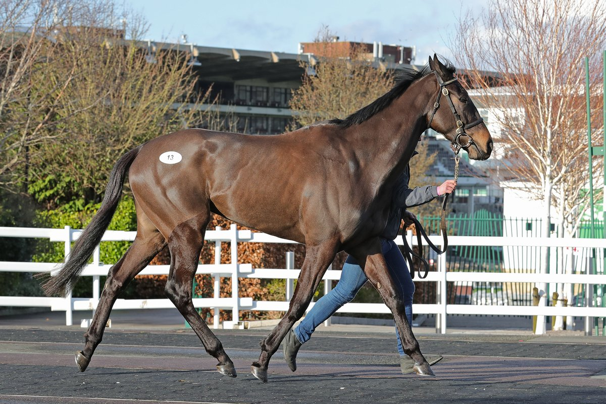 Star Gate makes an impressive winning debut over hurdles for @EWilliamsRacing and Mr & Mrs Rucker @Chepstow_Racing he was purchased at the #CheltenhamFebruary Sale from @colinboweracing https://t.co/NBQUABO6Ns