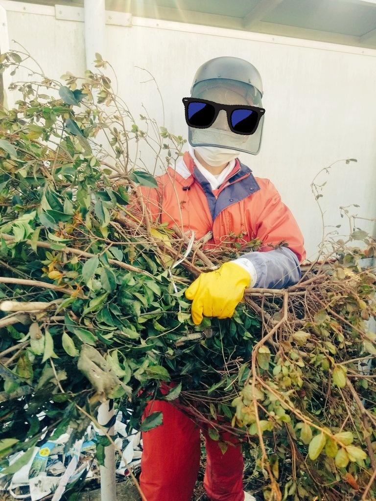 ご家庭から出た剪定枝は、当社独自の樹木粉砕車でチップ処理した後に小郡市の農家さんのもとで堆肥化されます。 もしかしたら、ご自宅のお庭の枝が巡り巡って食卓のお野菜になっているかもしれません😃素敵なサイクルですよね💕 #小郡市 #樹木 #チップ #堆肥 #野菜 #リサイクル https://t.co/GFKf0F2lWN