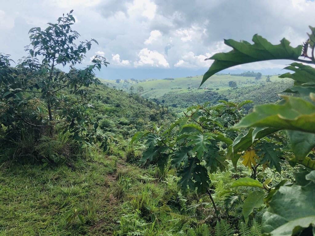Bibokoboko, DR Congo [OC] [2000 X 1500] https://t.co/Sb0siXiZPp