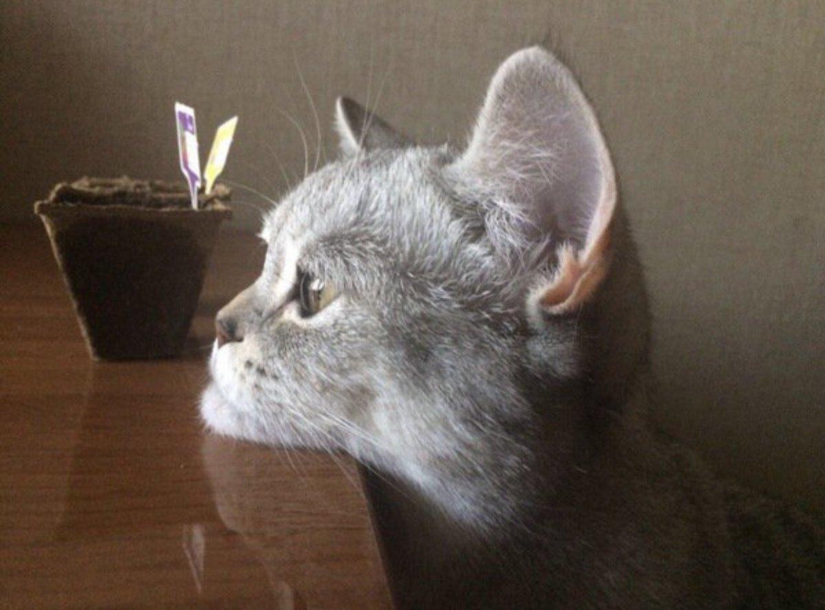 猫にもあご肉は存在する