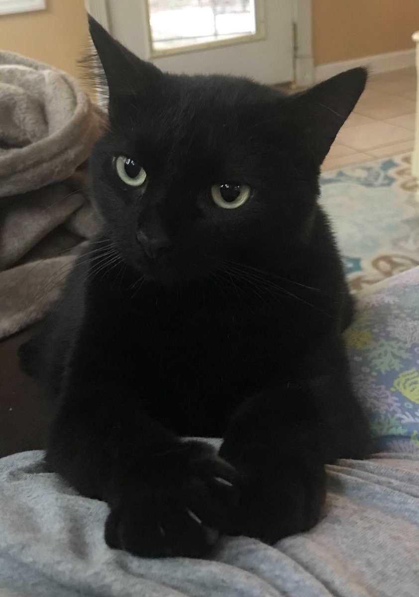 Kitty Friend and her gigantic feet want to wish you a happy and lucky National Black Cat Day! Share…