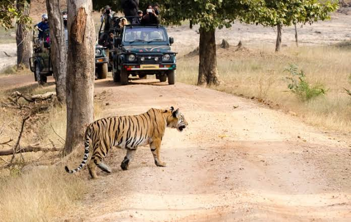 Uttar Pradesh's Dudhwa Tiger Reserve to #reopen on November 1  @CMOfficeUP @uptourismgov #DudhwaTigerReserve #tourism #safari #TigerReserve  #UttarPradesh #wildlife   READ|