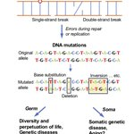 Image for the Tweet beginning: #Pathogenic mechanisms of somatic #mutation