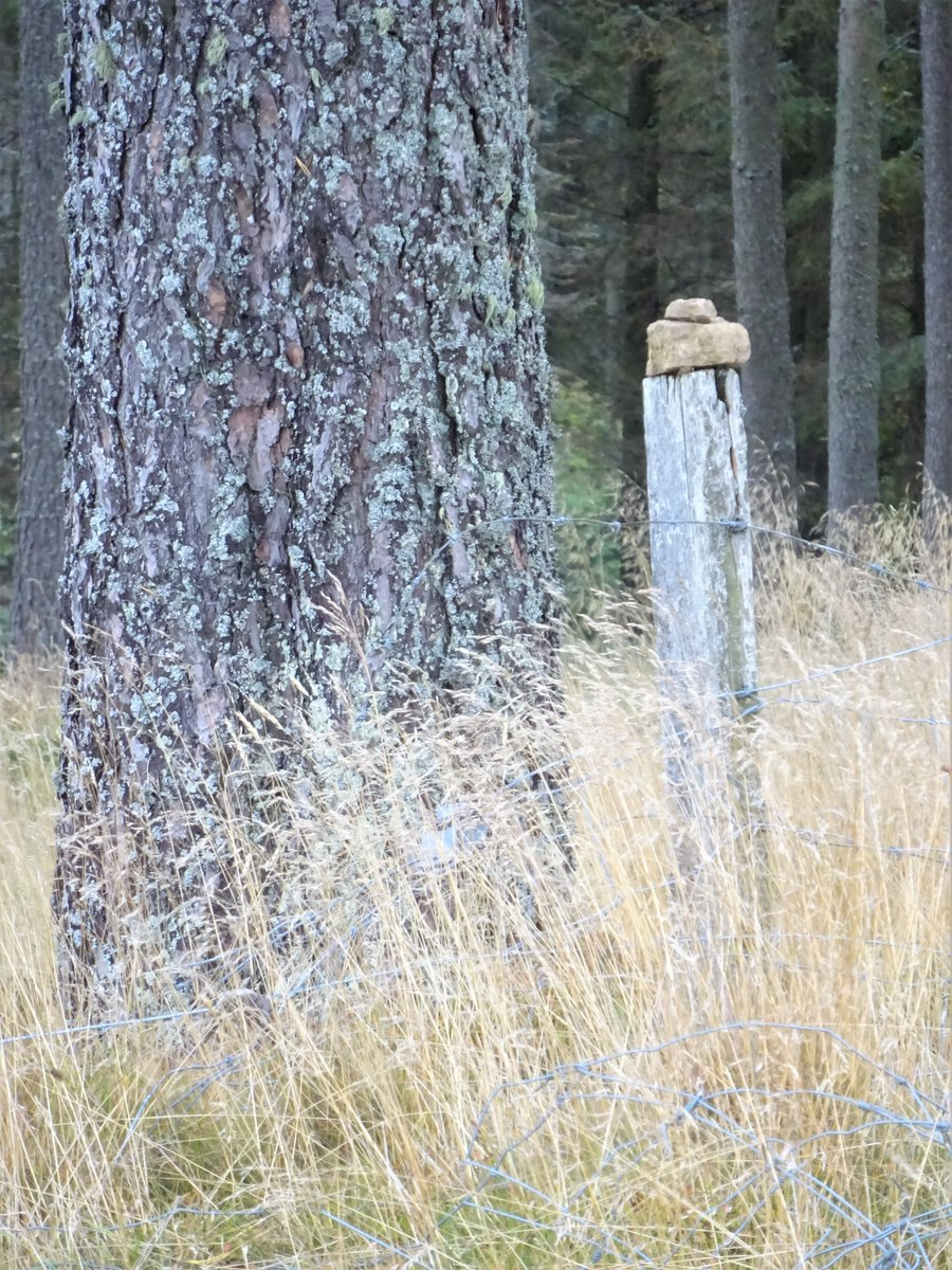 No walk today - here's a photo from a walk earlier in the month: grass in seed, bark, barbed wire, post, stone. #Photography #Diary https://t.co/PHX9q7RlYY