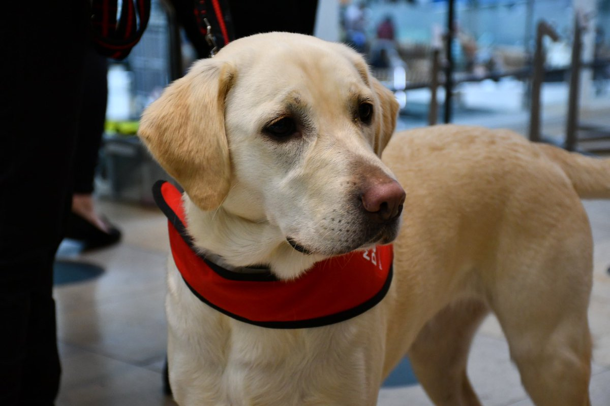 While at the station, HRH was joined by @DHSCgovuk to see how @MedDetectDogs have progressed in their training. The charity are working hard to ascertain whether dogs can detect the odour of Covid-19. If successful, dogs could help diagnose the disease through screening people.