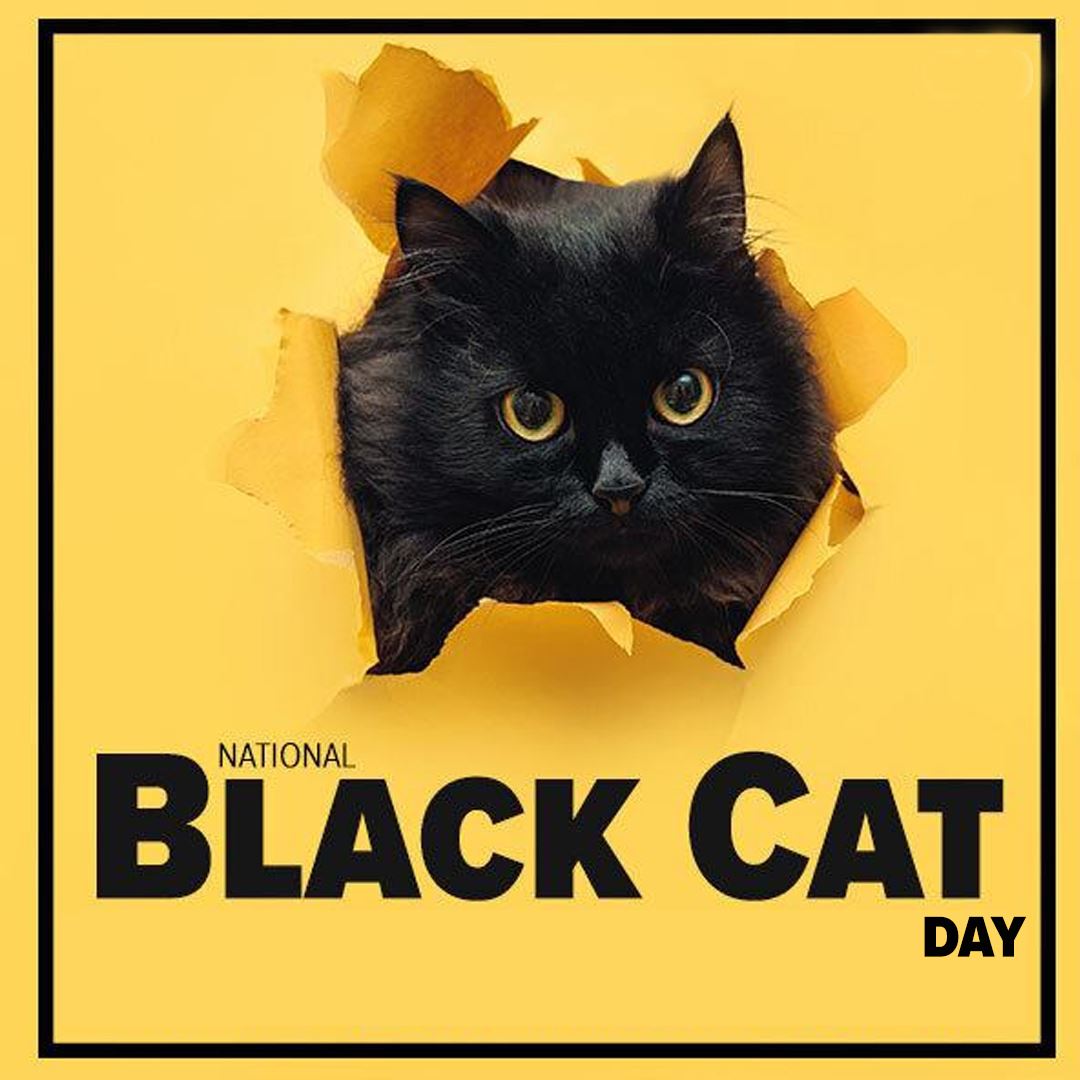 Happy #NationalBlackCatDay! 🐱 Share your photos of your pet animals in the comments below! #BeOn12