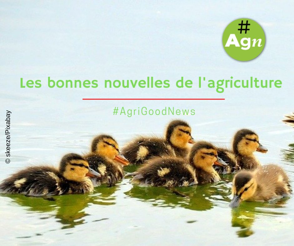 1⃣#AgriGoodNews – Réussir Vigne – Une convention collective nationale pour l'agriculture 🍇👩‍🌾🌾🐂🐖https://t.co/QdPqEwWGaf