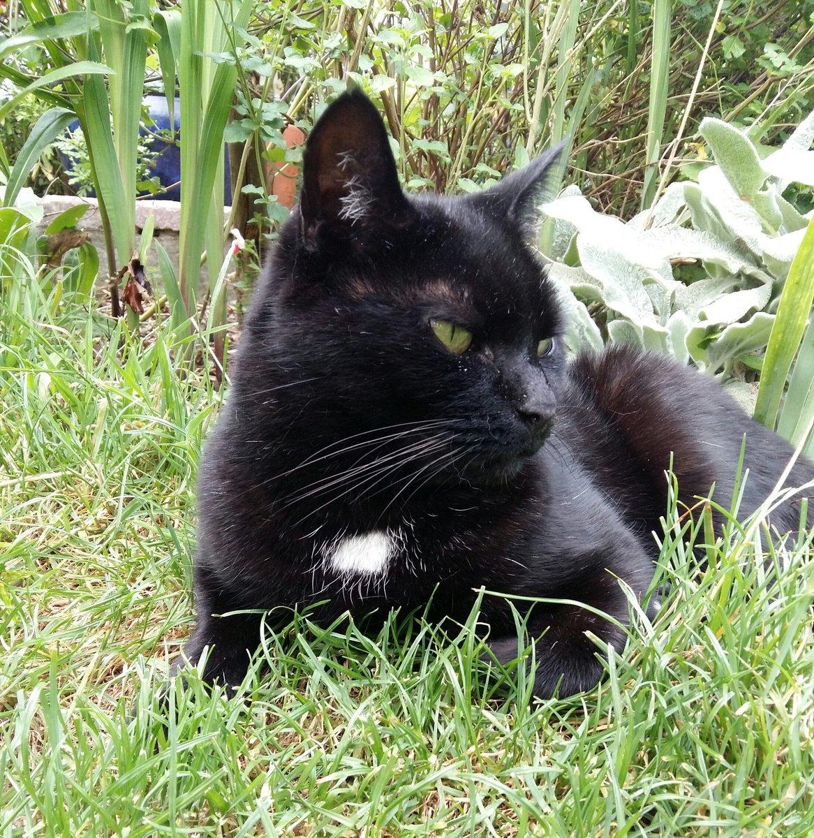 Happy #nationalblackcat from Benny! #blackcatday2020 #BlackCatDay #PanfurSquad https://t.co/1TqiPrKZZz