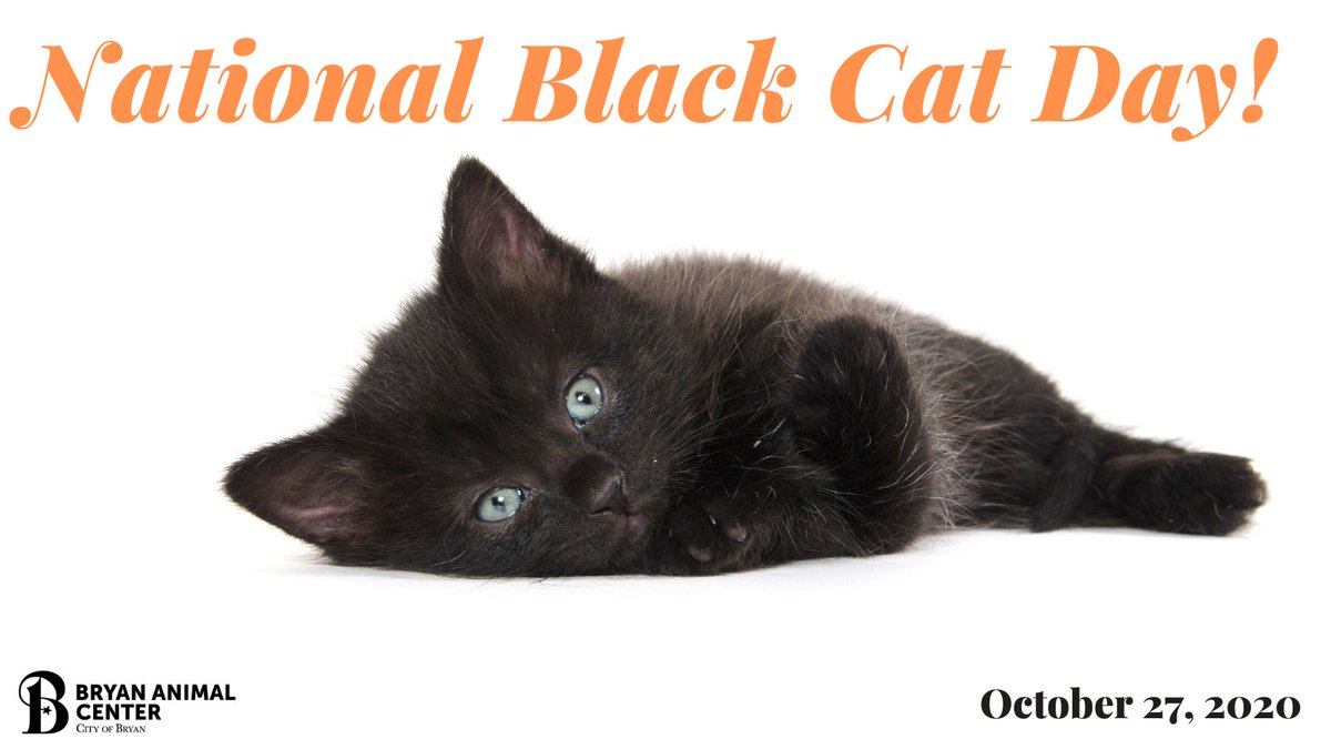 National Black Cat Day! Show us your black cat you adopted or rescued! 🐾😺🐾😺 #Nationalblackcatday #blackcats #Halloweenkity #CityofBryan #BryanAnimalCenter #Adopted #Rescue #CuteCat