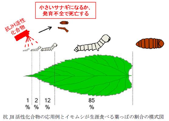 農研機構は、昆虫の幼若ホルモンの働きを抑える化合物を簡単に探索する方法を開発しました。幼若ホルモンの働きを抑えることができれば、農業害虫における食べ盛りの幼虫期間を短縮することにより、被害を最小限に抑えることができます。(2020年10月27日プレスリリース)