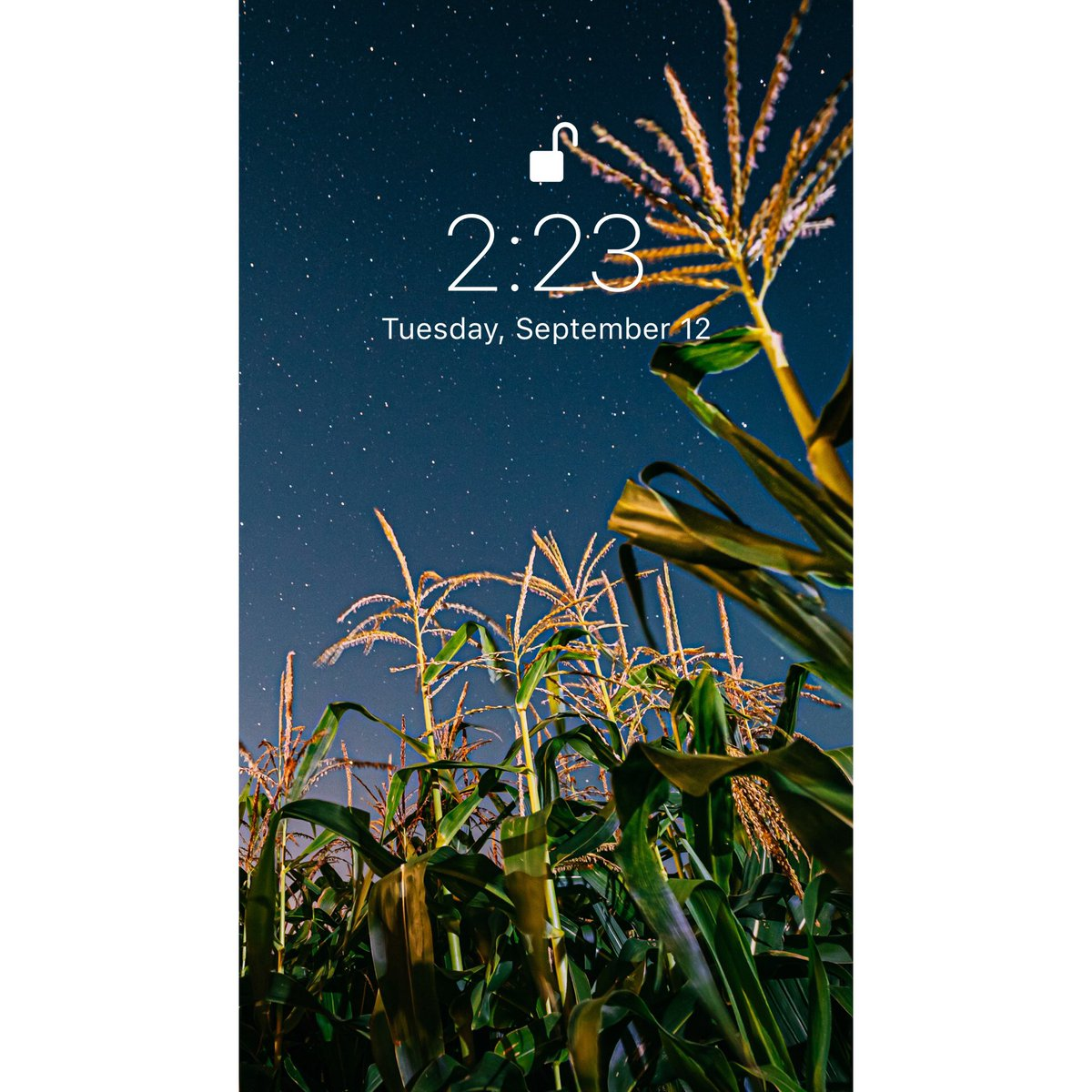 Lie in the field and look at the stars✨  #wallpaper #screensaver #background #sfondi #papeisdeparede #papeisdeparedetumblr #wallpaperhd #wallpaperiphone #vibes #nature #space #starrynight #field https://t.co/WMEkHK1nkZ