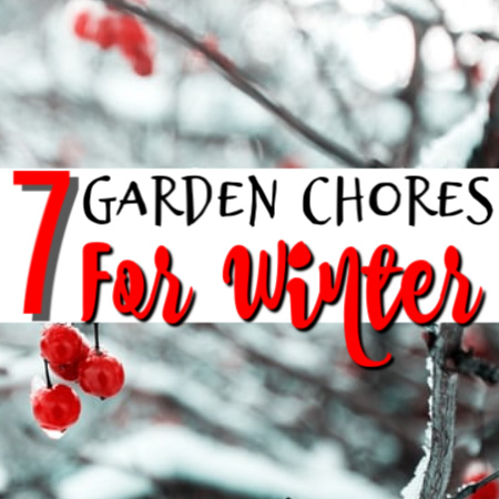 7 Garden Chores To Do Before Winter  https://t.co/3pOJUffjpg #gardeningmoments #plant #healthyfood #gardening #homegardening #kitchengarden #gardener #urbangarden #epicgardening #growyourown https://t.co/SWQO7du5pA