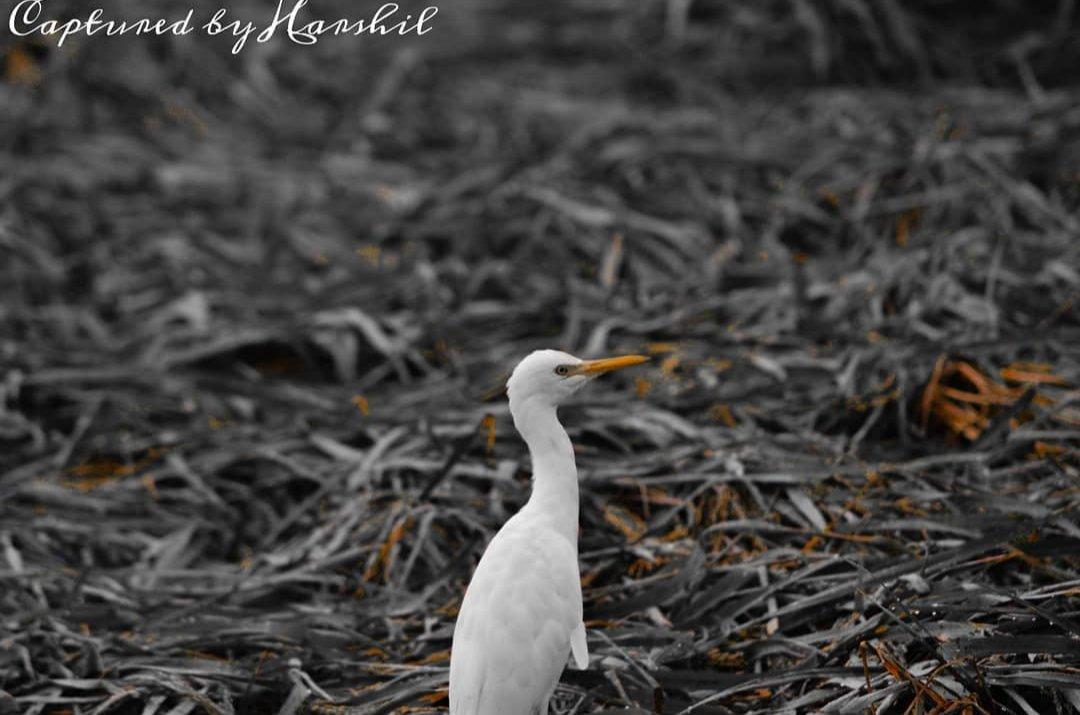 #TwitterTuesday #Twitter #post #Instagram #followthisaccount  #follow #2020  #COVID19 #photography #Photos #photoshop #lightroom #natgeo #animals #canonphotography #LIKEs #likesforlikes https://t.co/IGtrArJTFi