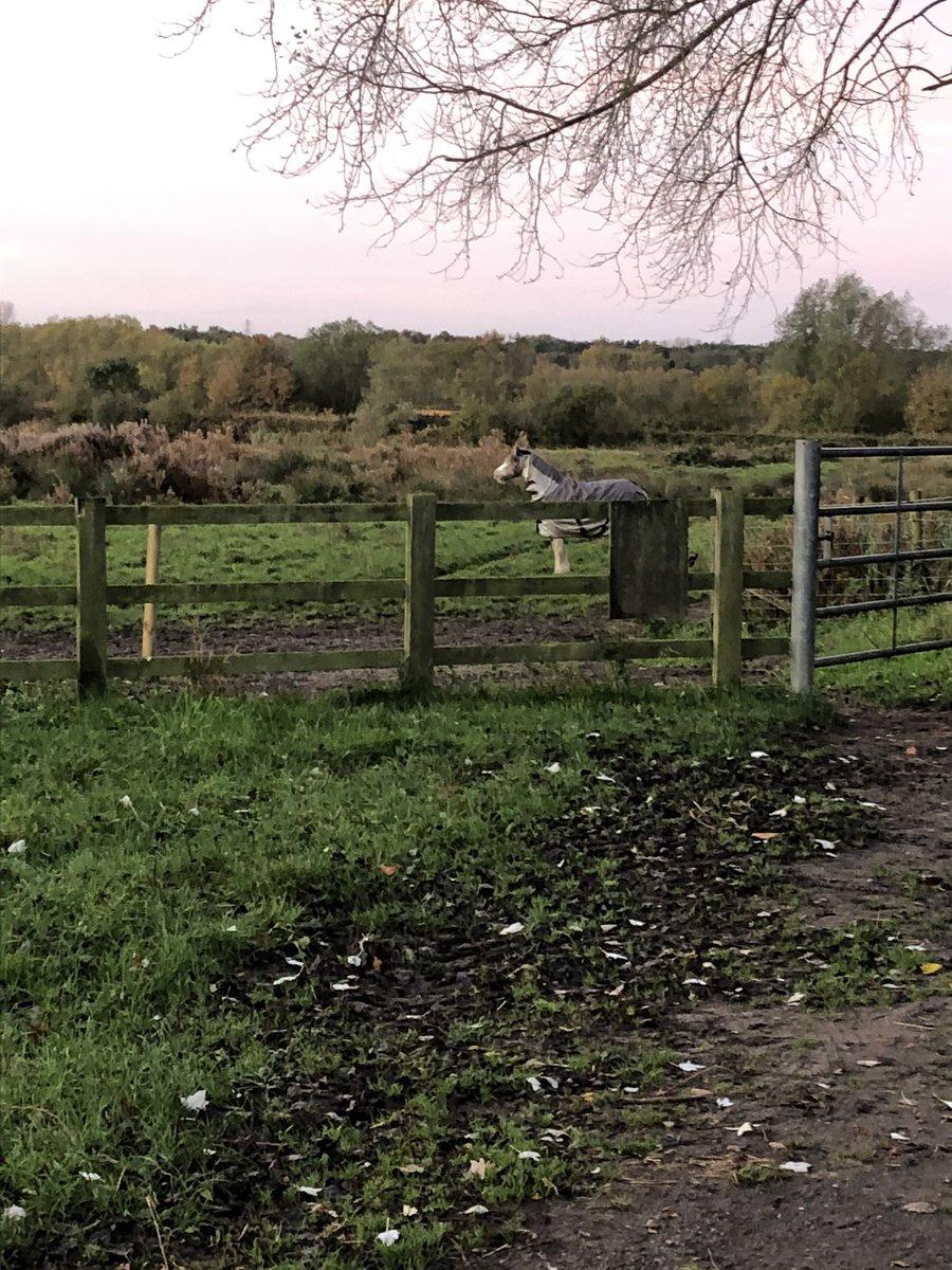 Buttercup where are you ? ? ? #tali #shesnotoutyet #pony #cob #field #grazing #findburtercup https://t.co/D5cOlNDsEU