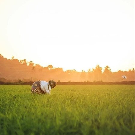 This is how beautiful our India is 🧡🧡🧡  #India #MyIndiaMyPride #Nature #Field   via MyNt https://t.co/m7VO5JxcfR