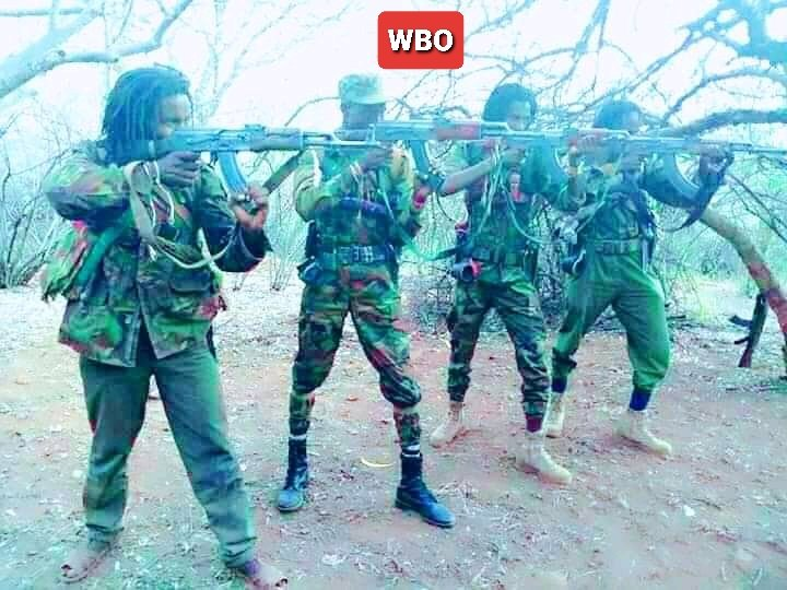 """Since neftegnas come to kill, #Oromo & other federalists must always be in standby mode to take neftegnas out. Def: neftegna means """"he who carries a gun to commit murder, robbery, rape & vandalism"""". It does not mean a boss. #WBO #WaaqBlessWBO #Oromia #Qeerroo #Ethiopia https://t.co/TTCT6MW7a0"""