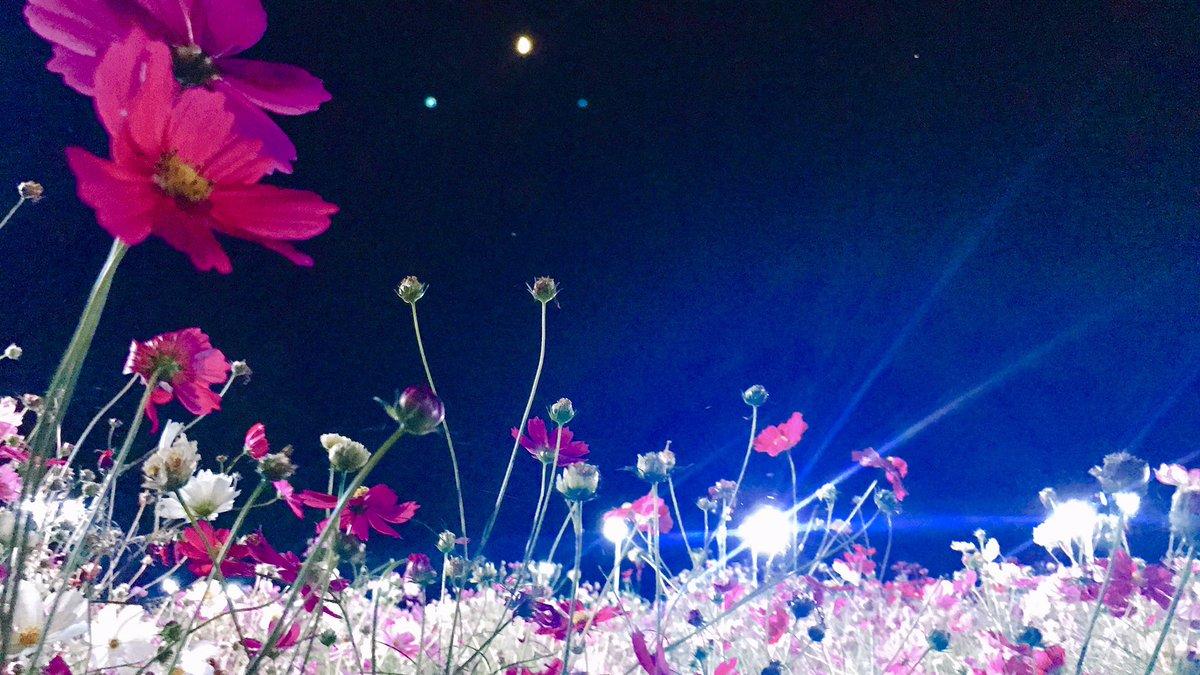 ⭐️夜の動植物園へ出かけませんか⭐️  10/31(土)〜11/8(日)〈休園日を除く 〉 毎日夜間開園を行います🌙  平日のお仕事帰りにも間に合います。 昼間とは全く違う雰囲気を体感しませんか✨  夜間の入園は事前予約が必要です! ↓コチラヘ https://t.co/4R89YEncCA  #オススメスポット #お出かけ #癒し https://t.co/PtWChbbED7