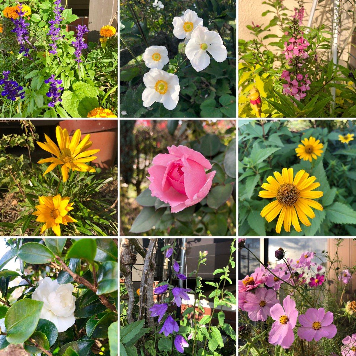 姉宅の庭の花達🌼🌸🌿🍀 #はな #花 #癒し https://t.co/LiMjldUPIz