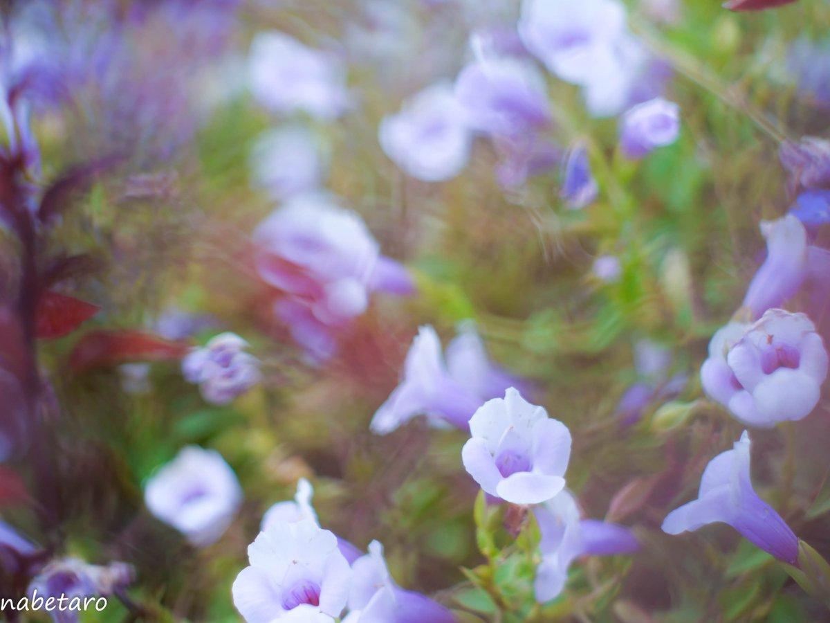 (・ω・)ノ Yashinon DX 50mm f1.7  #写真撮ってる人と繫がりたい #ファインダーの越しの私の世界 #花写真  #flower #キリトリセカイ #photography #LUMIX #G9Pro #マイクロフォーサーズ #オールドレンズ  #オールドレンズ倶楽部 #Yashinon https://t.co/FKamsJohwc