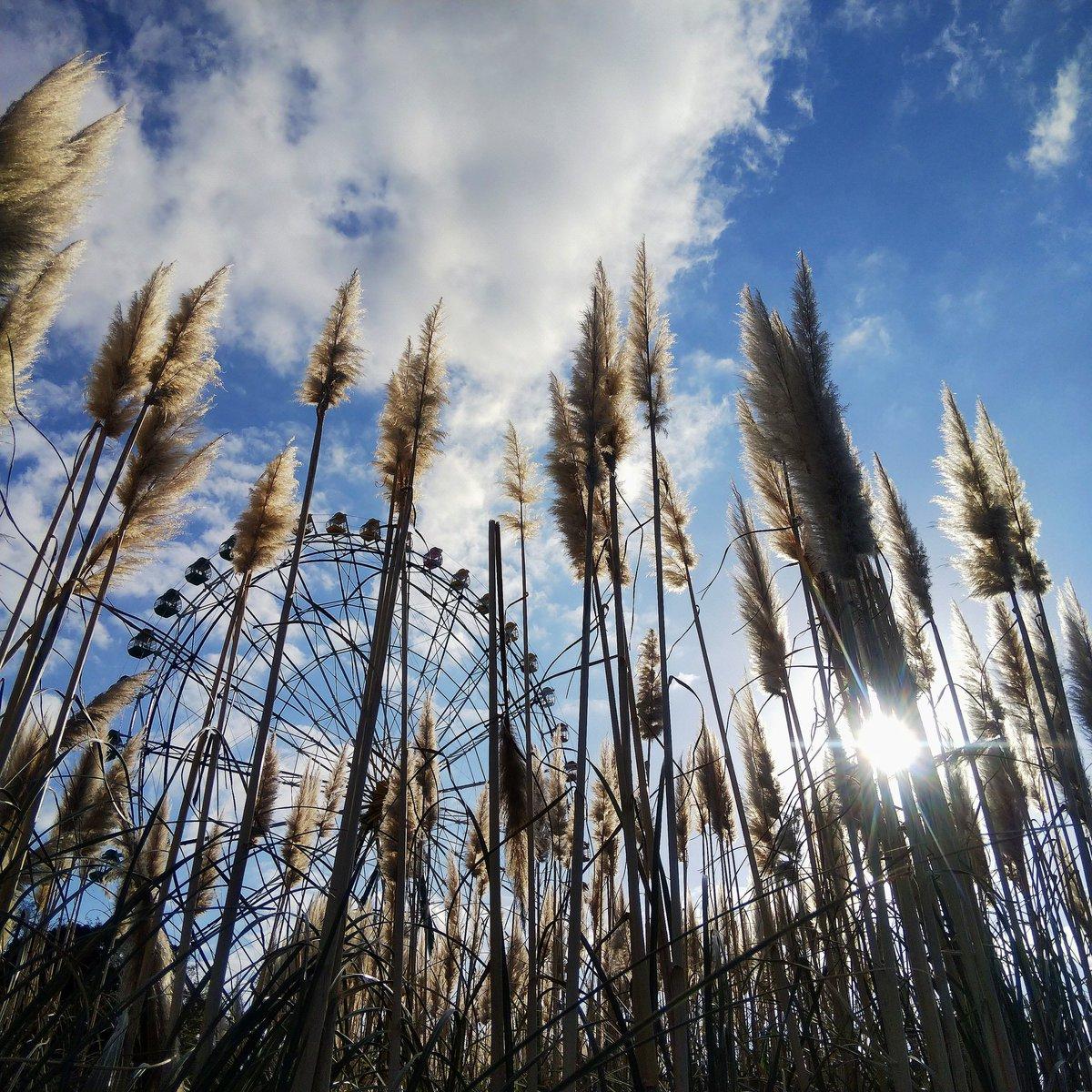 こんばんは #キリトリセカイ #空のある風景 #写真好きな人と繫がりたい #ファインダー越しの私の世界  #写真撮ってる人と繋がりたい  #風景 #秋 #ススキ #観覧車 https://t.co/bNyvoNqGpI