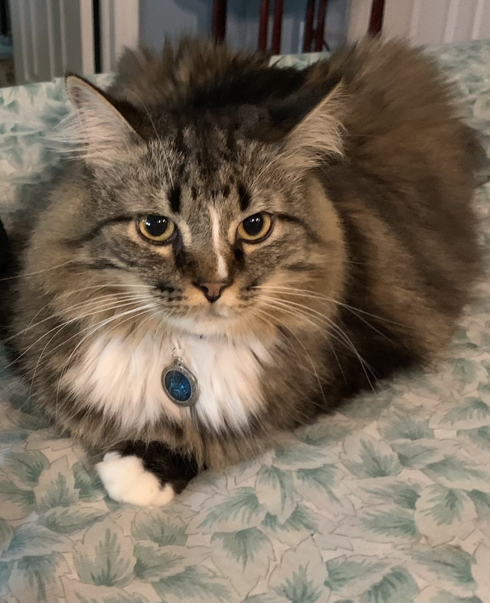It's #whiskerswednesday pals❣️ Have a nice day❣️❣️ @TheCatMalice @berylcoon @GeneralCattis @LordGraydon @ridley_aka @Ophur_Cat @JoyOfCats @BengalPandora @toby_rules1 @MaineCoonCatsOH @LittleMaineCoon  @JusticeToAll https://t.co/pJsGx0TjTv