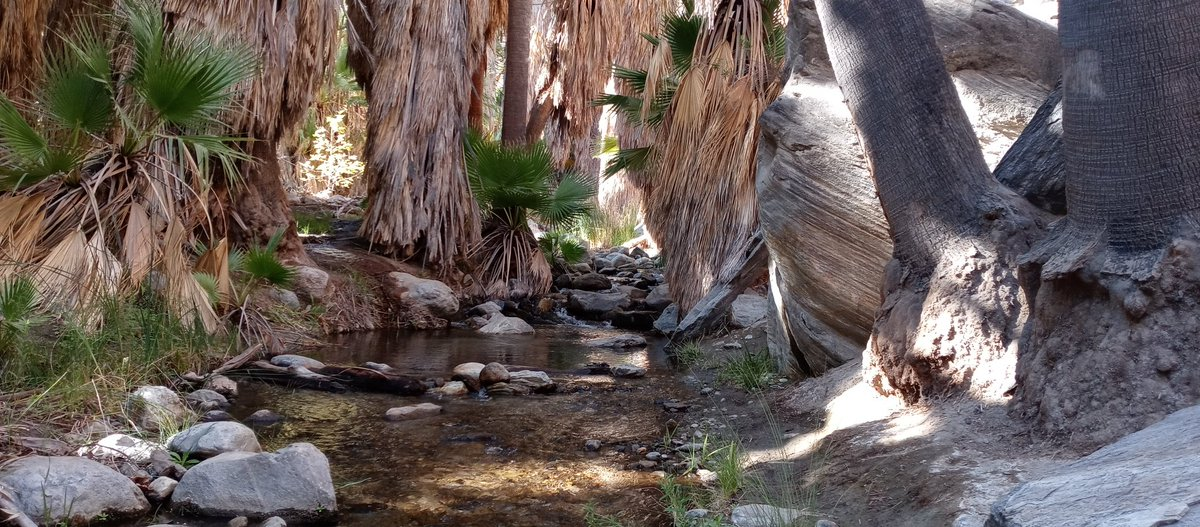#hiking Indian Canyon #PalmSprings #California  Fantastic Sights Urging Us To Explore Further Down the Magical Path. #NaturePhotography #naturelovers #glorious #outdoorfun #happiness https://t.co/hFWAA7iENC