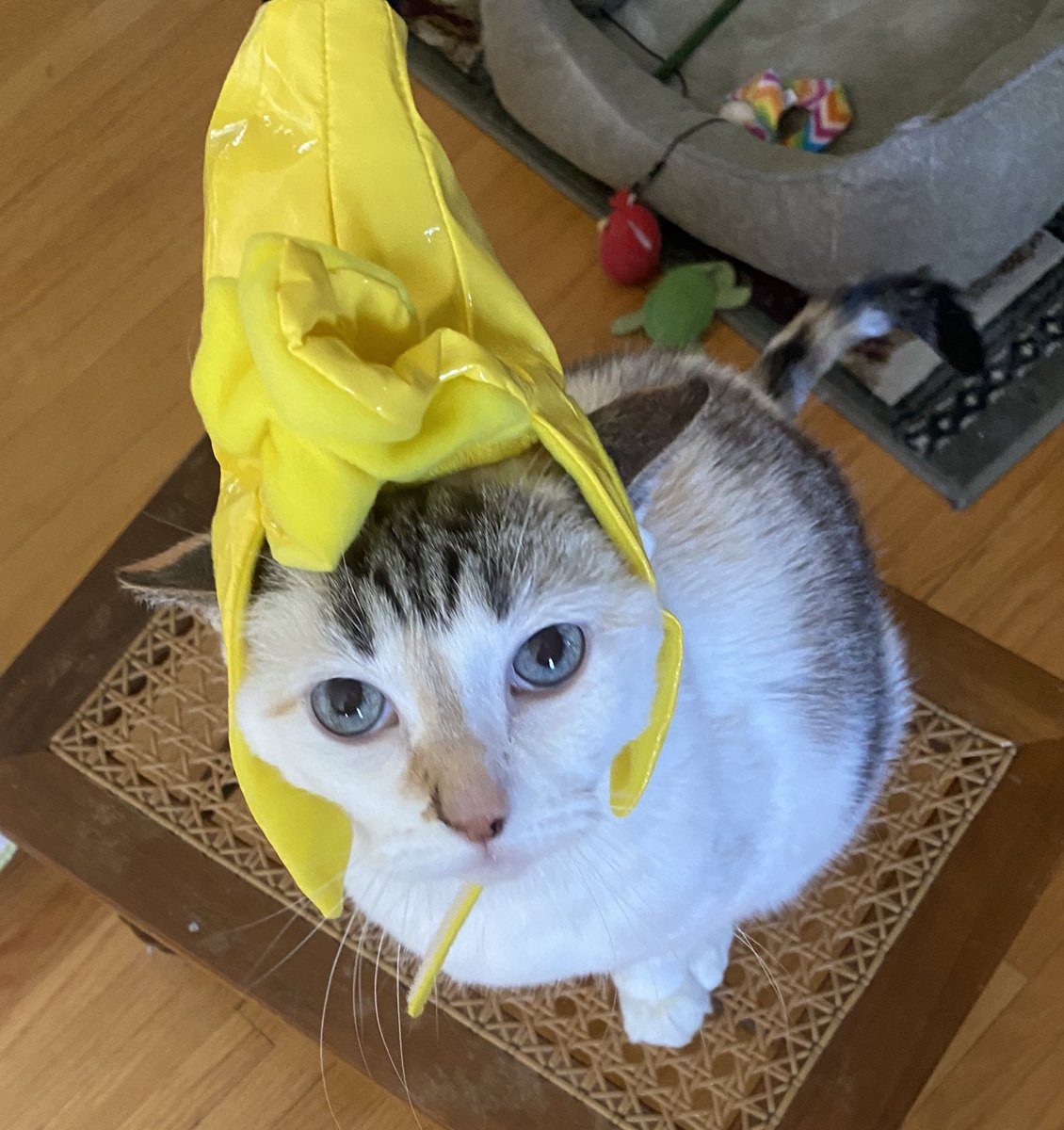 Pincy's #Halloween joke of the day: What do you call a tired skeleton on Halloween? The grim sleeper.  P.S. I'm a banana. https://t.co/8sGG7kf8P3