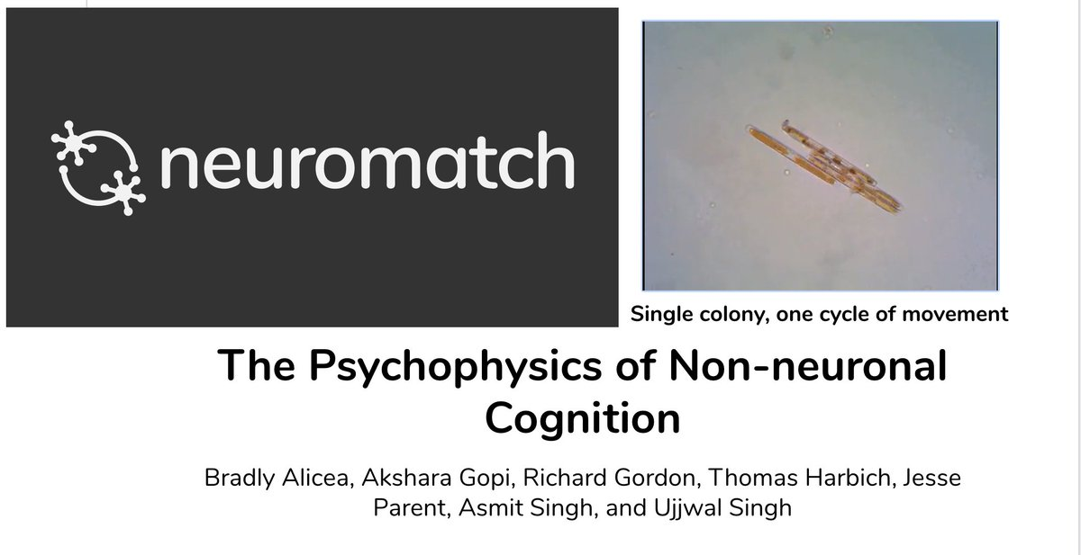 Join us tomorrow (Thursday the 29th) at #neuromatch for a talk on Non-neuronal Cognition and Psychophysical Modeling in Diatoms! It all happens in Room 8 at 12:30pm UTC #nm3  Slides (Figshare): https://t.co/MIiEKycp7P  Live Stream Channels (YT): https://t.co/saSGjDkhkv https://t.co/0BWz2neRk0