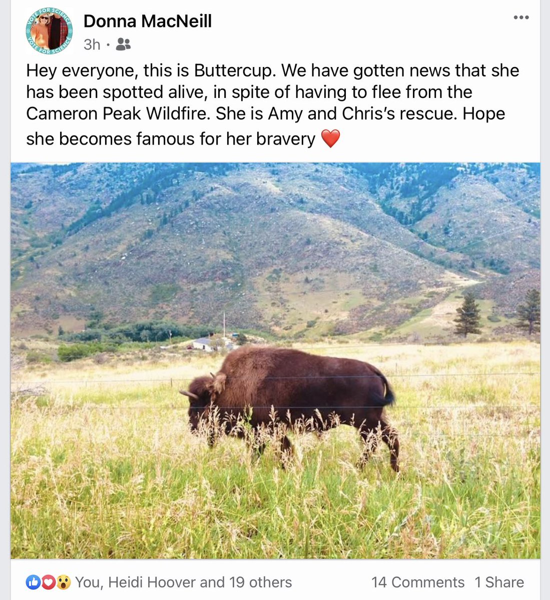 @anamariecox This is Buttercup, rescue bison who survived the Colorado fires. https://t.co/wOBWiJSYgH https://t.co/u0N8lr30mI