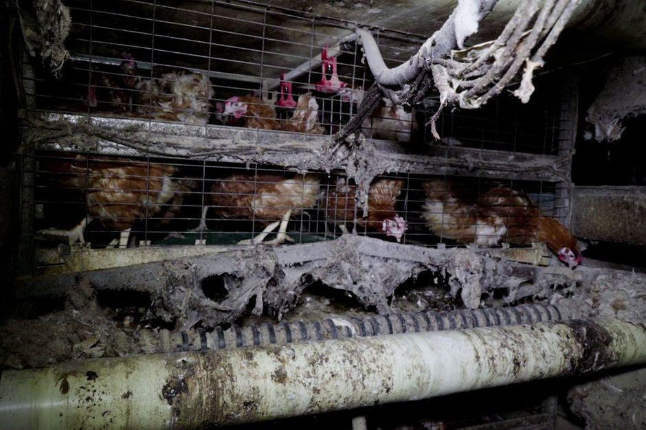 L214 épingle un élevage sordide de poules pondeuses dans l'Oise https://t.co/EsbTuwvbdN https://t.co/4VHqQ2bVdE