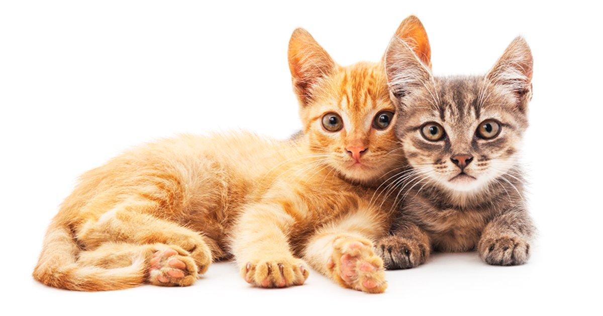 Hoy 29 de octubre es el Día Nacional del Gato en Estados Unidos, fecha propuesta de Colleen Paige, una experta en el comportamiento de los gatos, que quiso generar conciencia en la población, sobre la cantidad de gatos abandonados por las calles de las ciudades.