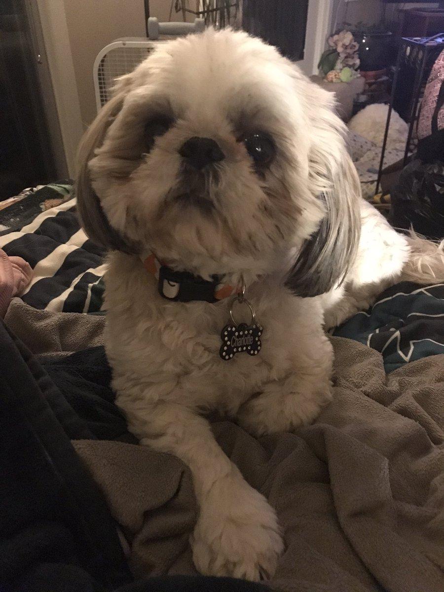 She's so stinkin cute 🥰 #dogsoftwitter