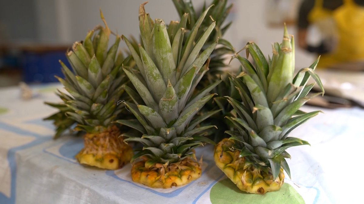Image for the Tweet beginning: Plates made from recycled pineapples